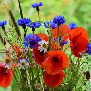 Международный конкурс детско-юношеского творчества к Дню цветка «УДИВИТЕЛЬНЫЕ ЦВЕТЫ»